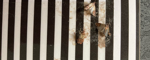 Tips against food moths